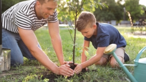 Get two free trees from Oncor