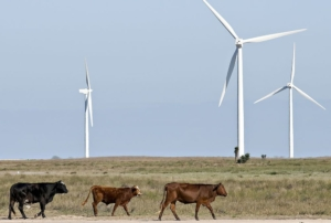 Wind Farms in Texas share the land with cattle